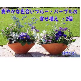 【ふるさと納税】ブルー・パープルの寄せ植え(舟形Mサイズ)2個 【花・植物】
