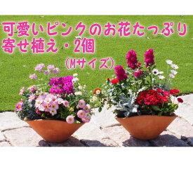 【ふるさと納税】可愛いピンクのお花たっぷりの寄せ植え(舟形Mサイズ)2個 【花・植物】