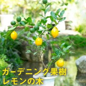 【ふるさと納税】ガーデニング果樹・レモンの木 ★ガーデニングショップ四季の里 【植物・果物類・柑橘類・レモン・檸檬】