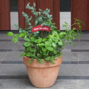 【ふるさと納税】ユーカリとハーブ5種 寄せ植え 【植物】