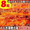 【ふるさと納税】B149.『丑の日までにお届け!!』うなぎの蒲焼8尾(計1600g以上)
