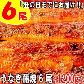 【ふるさと納税】AE71.『丑の日までにお届け!!』うなぎの蒲焼6尾(計1200g以上)
