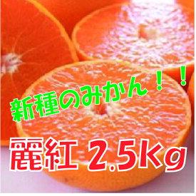 【ふるさと納税】A511.【新種の柑橘】麗紅(れいこう)/約2.5キロ(2022年1月末〜2022年2月末発送予定)