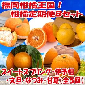 【ふるさと納税】E084.福岡柑橘王国!柑橘定期便Bセット