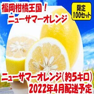 【ふるさと納税】福岡柑橘王国.ニューサマーオレンジ約5キロ/2022年4月配送.A696