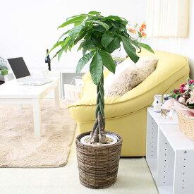 【ふるさと納税】風水にも良い観葉植物。パキラ 7号 ブラウンバスケット鉢カバー【※北海道・沖縄・離島のお届け不可】