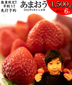 【ふるさと納税】AZ015 数量限定 あまおう 1500g (250g×6パック) いちご 苺 フルーツ 果物 先行予約 福岡県産 冷蔵 送料無料※2022年2月より順次発送予定