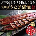【ふるさと納税】九州産うなぎ蒲焼大2尾