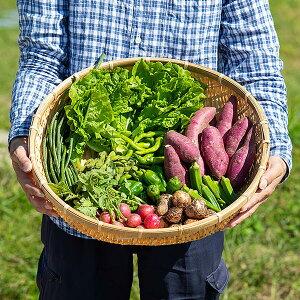 【ふるさと納税】B−024.佐賀産季節の旬野菜(10種類)