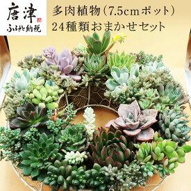 【ふるさと納税】多肉植物エケベリア24ポット おまかせセット アソート 観葉植物 癒し