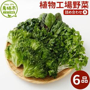 【ふるさと納税】15-12 植物工場野菜 詰め合わせA