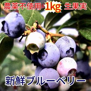 【ふるさと納税】b−152 ブルーベリー 生 農薬不使用 多久産 1kg【限定50セット】