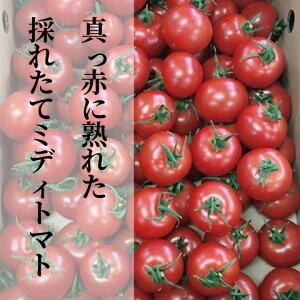 【ふるさと納税】b−157真っ赤に熟れた採れたてミディトマト 3kg
