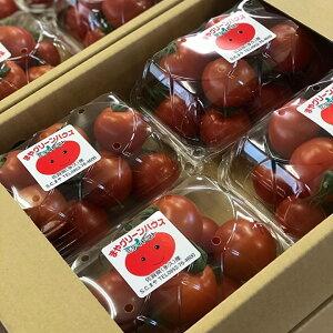 【ふるさと納税】a−63真っ赤に熟れた採れたてミディトマト