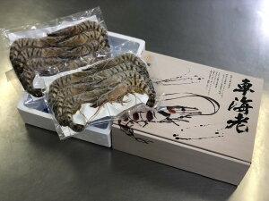 【ふるさと納税】伊万里産 お刺身用冷凍ジャンボ車海老(250g×2) C085
