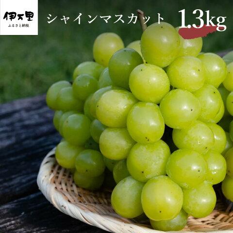 【ふるさと納税】シャインマスカット 約1.3kg 【8月中...