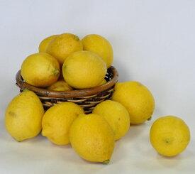 【ふるさと納税】B-127 希少な国産レモン【宝韶寿レモン】訳アリ 約2kg(サイズ混合)