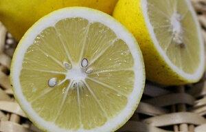【ふるさと納税】B-91 【期間限定!】オーガニックレモン 2.5kg
