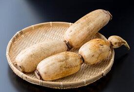 【ふるさと納税】 畑から直送!新鮮レンコン(1.5kg-2kg) れんこん 佐賀産 蓮根 新鮮 とれたて 野菜 国産 おせち きんぴら てんぷら 揚げ物 れんこんチップス 九州産 送料無料