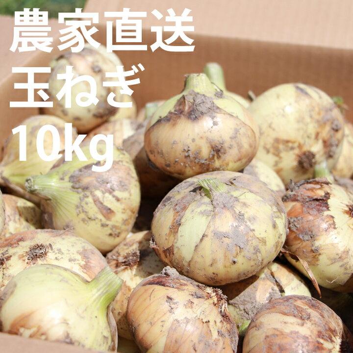 【ふるさと納税】農家さん直送タマネギ!使いやすいMサイズ(10kg)