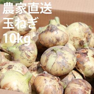 【ふるさと納税】農家直送!佐賀県産玉ねぎ(10kg)M〜2Lサイズ 送料無料