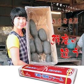 【ふるさと納税】 (先行予約開始)大人気!佐賀県産泥付きレンコン(3kg) 送料無料 農家直送 続々高評価