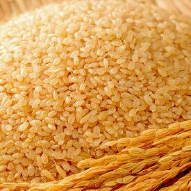 【ふるさと納税】【定期便6ヶ月】10年連続最高評価特A受賞米! さがびより玄米10kg (H015114)