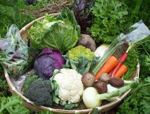 【ふるさと納税】よしのがり野菜セットラージ(11B02-01)
