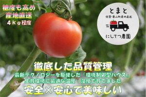 【ふるさと納税】A1-050R 【限定100セット】にしてつ農園トマト(4kg)
