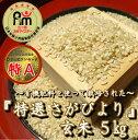 【ふるさと納税】【令和元年度産】有機肥料を使って栽培した≪特選さがびより≫みやき町産【玄米5kg】(CI004)