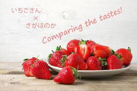 【ふるさと納税】いちご食べ比べ いちごさん さがほのか(BC016)
