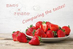 【ふるさと納税】いちご食べ比べ さがほのか 恋みのり(BC017)