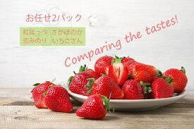 【ふるさと納税】いちご食べ比べ おまかせ2パック さがほのか いちごさん 恋みのり 紅ほっぺ(BC018)