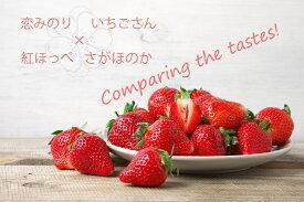 【ふるさと納税】いちご食べ比べ さがほのか いちごさん 恋みのり 紅ほっぺ(BC019)