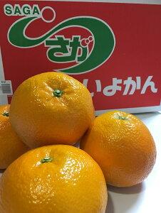 【ふるさと納税】いよかん9〜10kg(3L〜Lサイズ)(BC009)