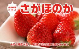 【ふるさと納税】あま〜い!!キンド酵素栽培いちご【さがほのか270g×4パック】(AE001)
