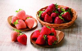 【ふるさと納税】☆1月より順次配送☆3色いちご食べ比べセット