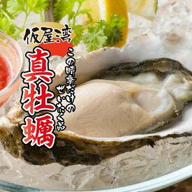 【ふるさと納税】仮屋湾の真牡蠣(1.8kg)【殻付き】