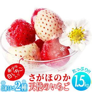 【ふるさと納税】TM210002R 【さがほのか&天使のいちご】2種のこおりいちご