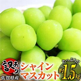 【ふるさと納税】AF210028R 訳あり 佐賀県産シャインマスカット (1.4~1.5kg)