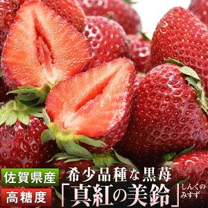 【ふるさと納税】KN19003R  【希少品種】糖度が高い黒苺『真紅の美鈴』
