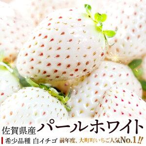 【ふるさと納税】SF19001R 真っ白な希少品種の白イチゴ『パールホワイト』