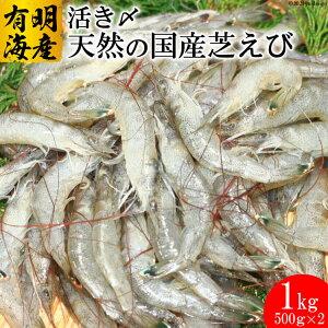 【ふるさと納税】活き〆天然小エビ 1kg(500g×2パック)