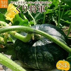 ホクホク甘い!長崎県産くりかぼちゃ「くり将軍」