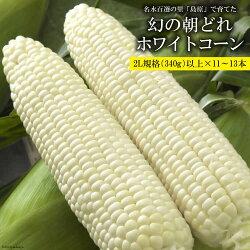 「幻の朝どれホワイトコーン!」2L以上×11〜13本セット