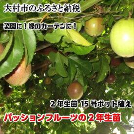 【ふるさと納税】0067.パッションフルーツの2年生苗