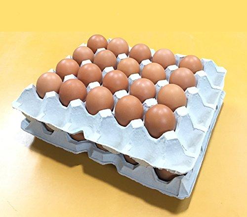 【ふるさと納税】養鶏場直送!松浦の赤たまご(40個)