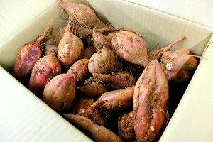 【ふるさと納税】【C0-008】道の駅松浦直営農場産 赤土栽培「安納いも」10kg