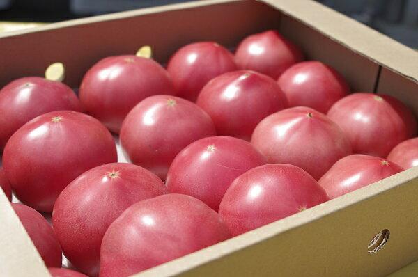 【ふるさと納税】期間限定 真っ赤なトマト3kg〜3.5kg