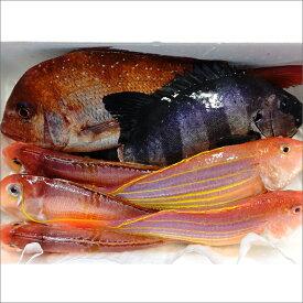 【ふるさと納税】B-005 浜あげ即出し鮮魚セット